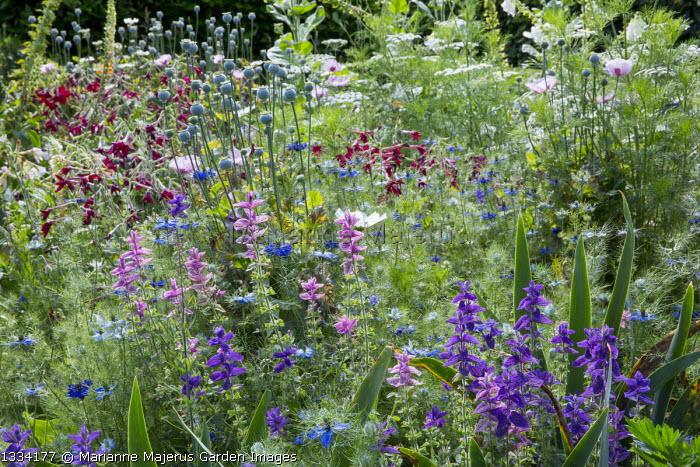 Salvia viridis, nicotiana, Nigella damascena, poppy seedheads, ammi