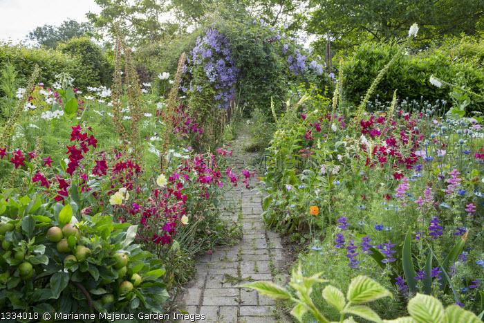 Path through cottage garden, nicotiana, Cosmos bipinnatus, Salvia viridis, Nigella damascena, clematis climbing on arbour, step-over apple