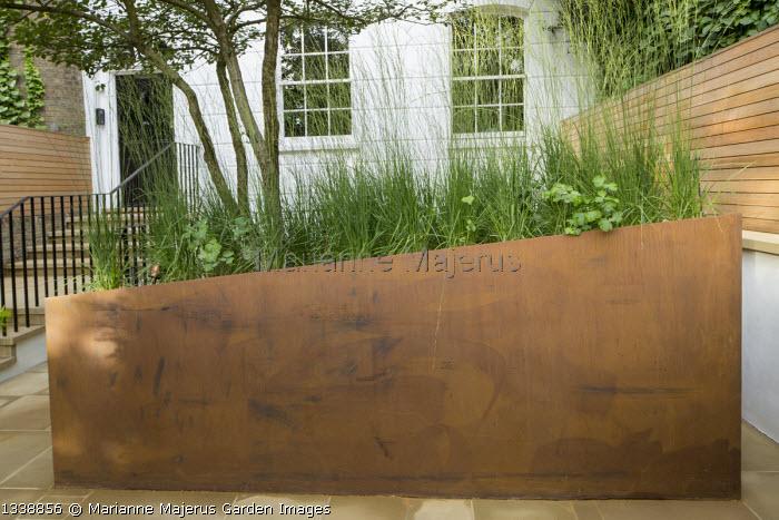Molinia caerulea subsp. caerulea 'Heidebraut' in cor-ten steel raised bed in front garden, stone paving, multi-stemmed Crataegus persimilis 'Prunifolia'
