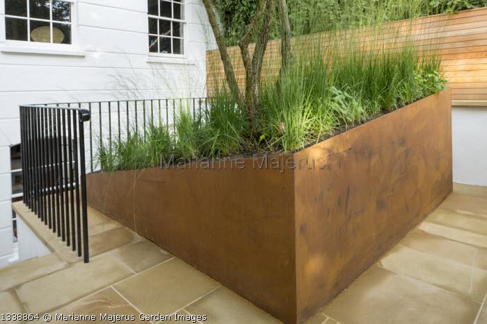 Molinia caerulea subsp. caerulea 'Heidebraut' in cor-ten steel sloping raised bed in front garden, stone paving, wooden fence