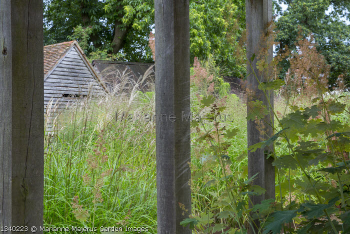 Oak pavilion in sea of ornamental grasses, molinia, miscanthus, Macleaya microcarpa 'Spetchley Ruby'