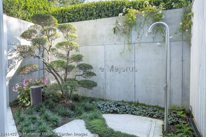Outdoor shower in basement courtyard, Begonia grandis subsp. evansiana, cloud-pruned Enkianthus campanulatus niwaki bonsai, Ophiopogon japonicus, Isotoma fluviatilis, Blechnum spicant, Asrarum splendens