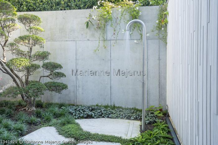Outdoor shower in basement courtyard, Asarum splendens, Blechnum spicant, cloud-pruned Enkianthus campanulatus niwaki bonsai, Ophiopogon japonicus, Isotoma fluviatilis