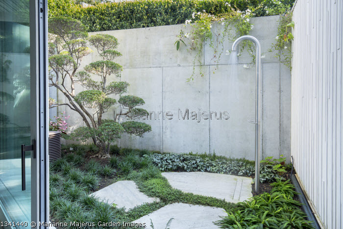 Cloud-pruned Enkianthus campanulatus niwaki bonsai and outdoor shower in basement courtyard, stone wall, Ophiopogon japonicus, Isotoma fluviatilis, Blechnum spicant, Asrarum splendens