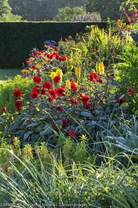 Exotic border in walled garden