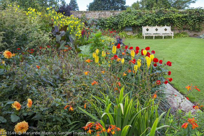 Exotic border in walled garden, view across lawn to bench, Crocosmia x crocosmiiflora 'Star of the East', Kniphofia 'Wrexham Buttercup', Helianthus 'Lemon Queen', Dahlia 'Kung Fu'