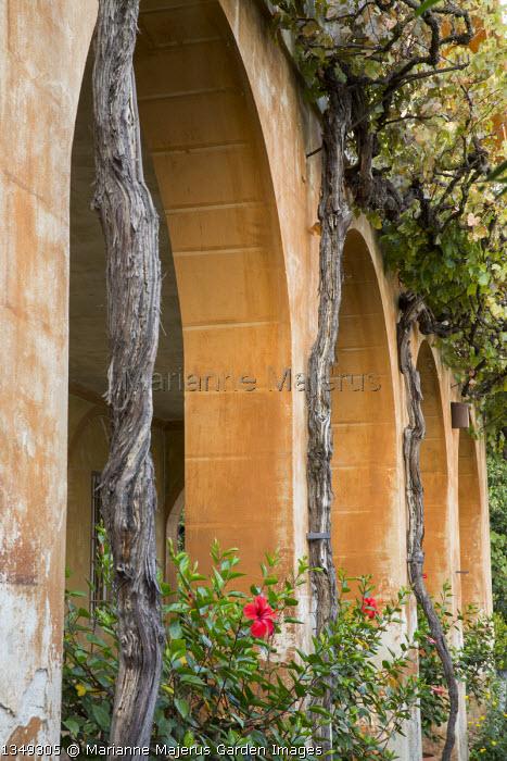 Hibiscus under archways, mediterranean arcade