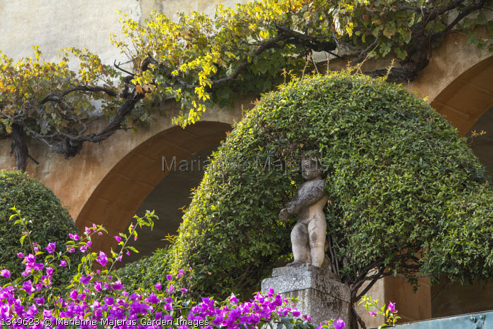 Stone statue, grape vine climbing on house wall, bougainvillea