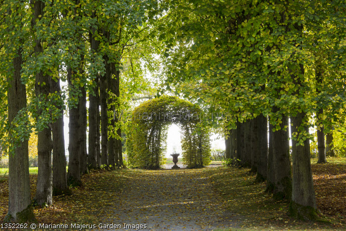 Formal beech woodland avenue leading to arbour or arch and urn