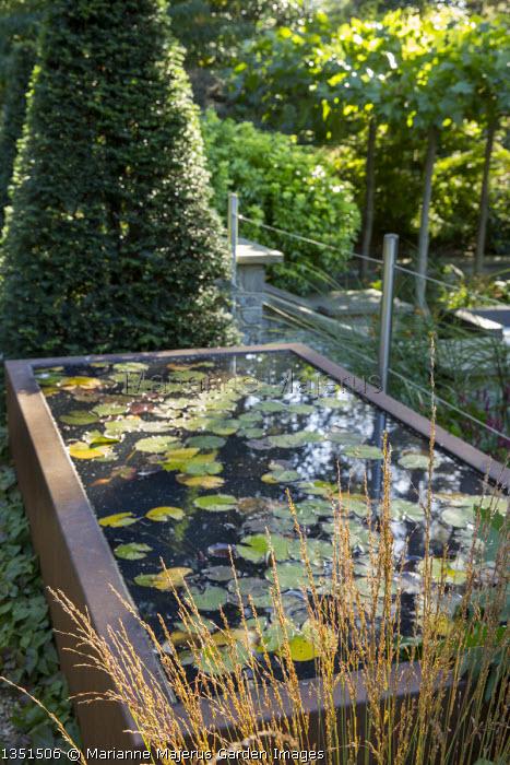 Raised water lily pond on terrace, yew pyramid topiary, Molinia caerulea subsp. caerulea 'Heidebraut'