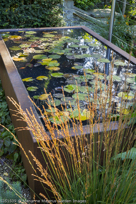 Raised water lily pond on terrace, Molinia caerulea subsp. caerulea 'Heidebraut'
