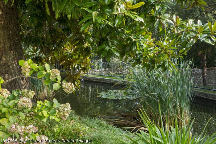 Pond, Hydrangea macrophylla 'Domotoi'