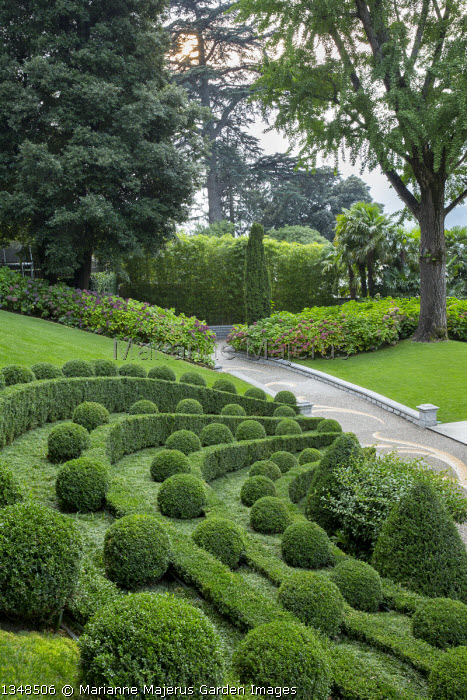 Box topiary on sloping bank, pebble mosaic paving, Hydrangea macrophylla