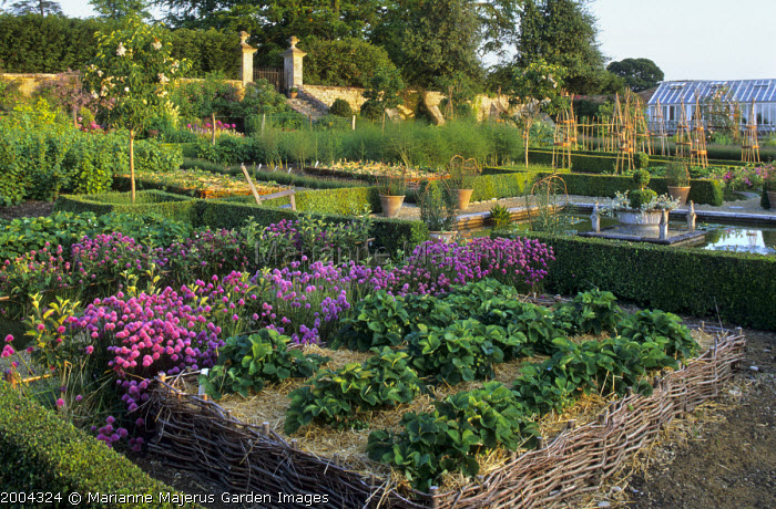 Strawberries mulched with straw in woven willow edged border, chives, low clipped box hedges