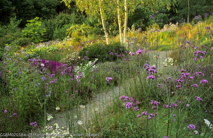 Cretan garden, Verbena bonariensis, Evening primroses