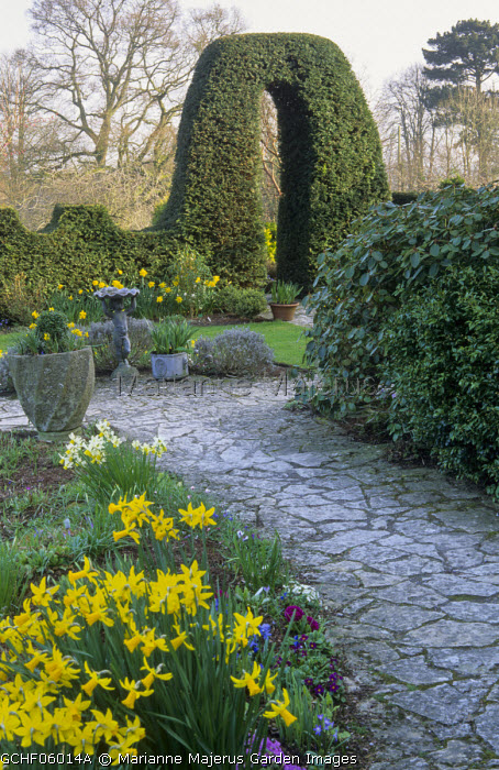 Crazy paving stone path, yew hedge, daffodils