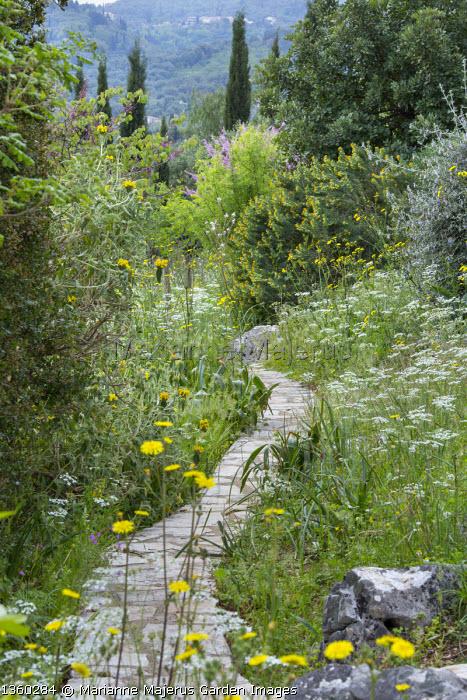 Stone path through mediterranean garden, Leontodon tuberosus, Sonchus oleraceus, Medicago arborea