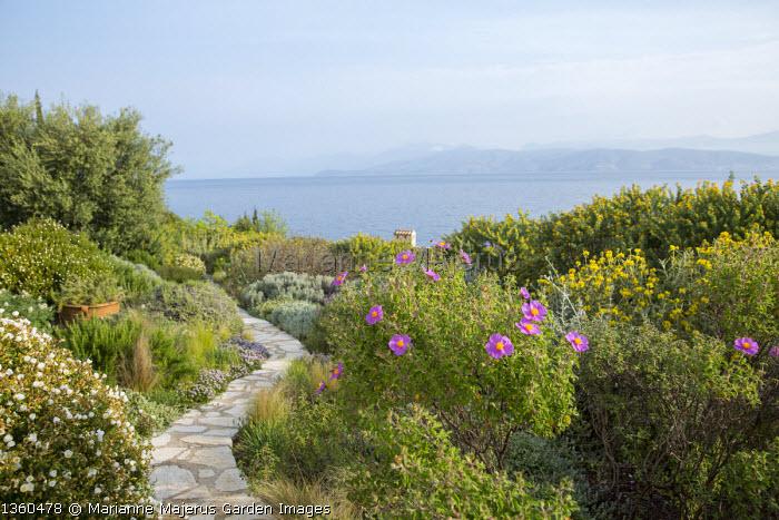 Stone path through mediterranean garden, view to sea, cistus, Medicago arborea