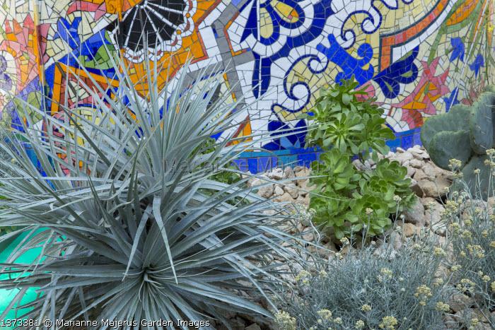 Dracaena draco, Helichrysum italicum, aeonium, colourful mosaic wall, stone mulch