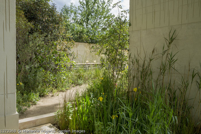 Wildlife pond by Maltese limestone wall, Iris pseudacorus, Phragmites australis, path leading to table on terrace