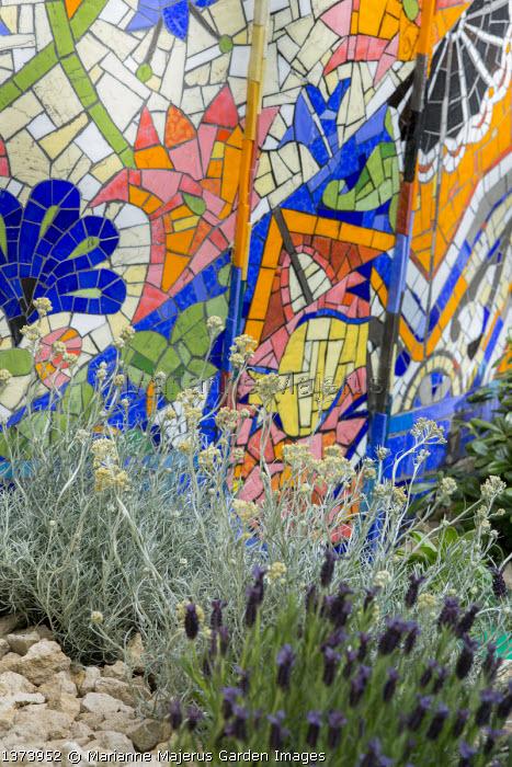 Colourful mosaic wall, Lavandula stoechas, Helichrysum italicum