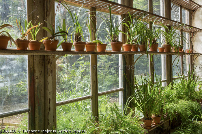 Plants in pots on shelves in Orangery