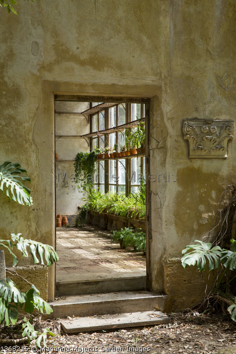 Doorway to orangery, Monstera deliciosa