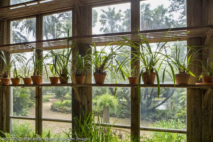 Plants in pots on shelves in Orangery