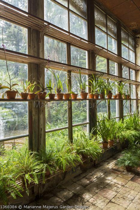 Orangery, ferns in pots
