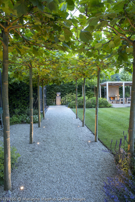Pleached London plane tree arbour over gravel path, view to urn on plinth