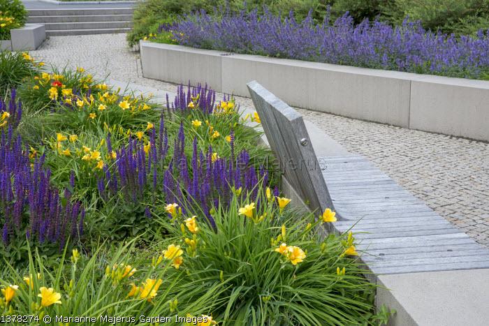 Built-in wooden bench on stone wall, Salvia nemorosa 'Ostfriesland', Hemerocallis minor, Nepeta racemosa 'Walker's Low'