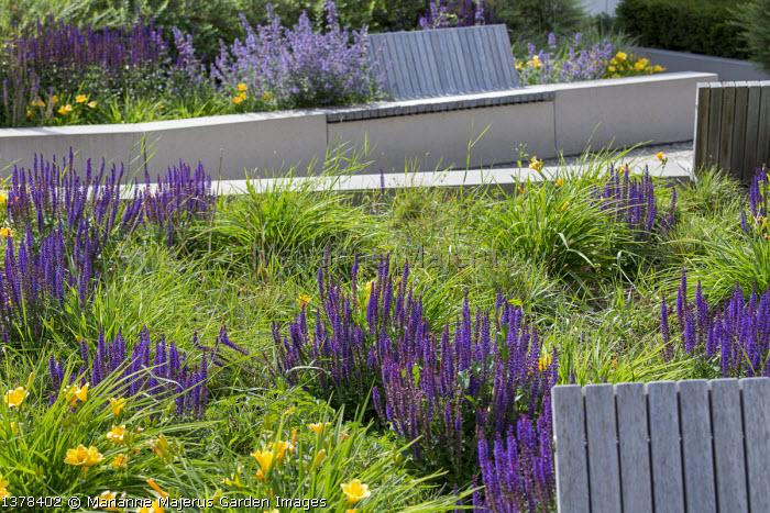 Built-in wooden benches on stone walls, Salvia nemorosa 'Ostfriesland', Hemerocallis minor, Nepeta racemosa 'Walker's Low'