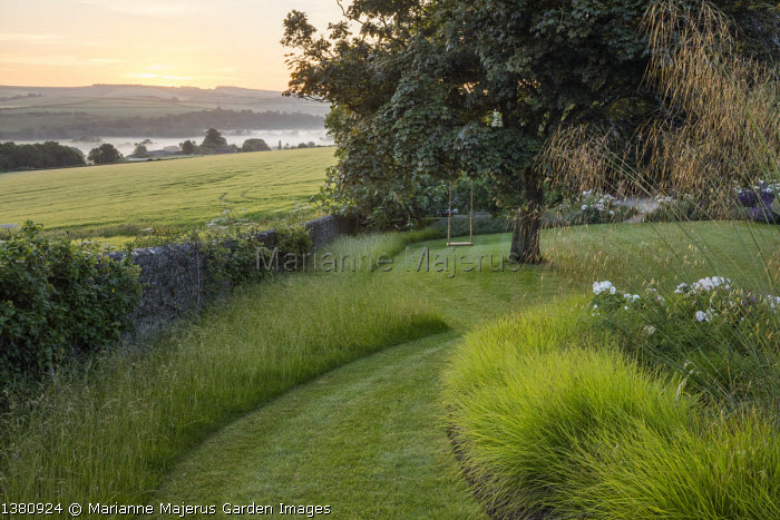 Mown grass path, swing seat hanging from sycamore tree, Sesleria autumnalis, Stipa gigantea, long grass meadow