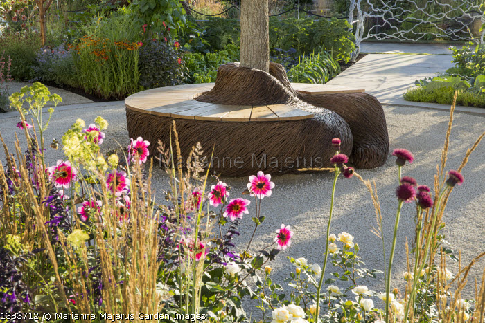Woven willow bench by Tom Hare around base of tree, Salvia 'Amistad', dahlia, Cirsium rivulare 'Atropurpureum'