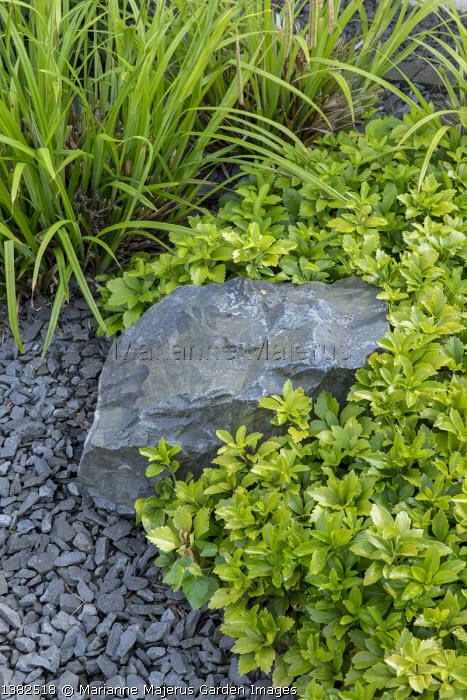 Pachysandra terminalis, gravel mulch, rock, Carex pendula