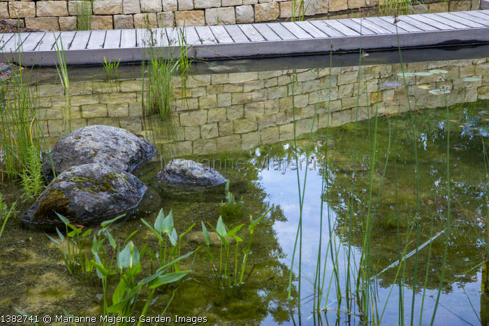 Natural swimming pond, decking path