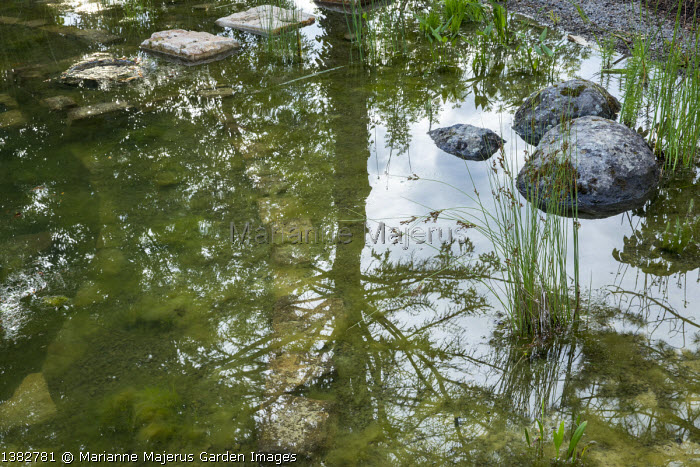 Reflections in natural swimming pool