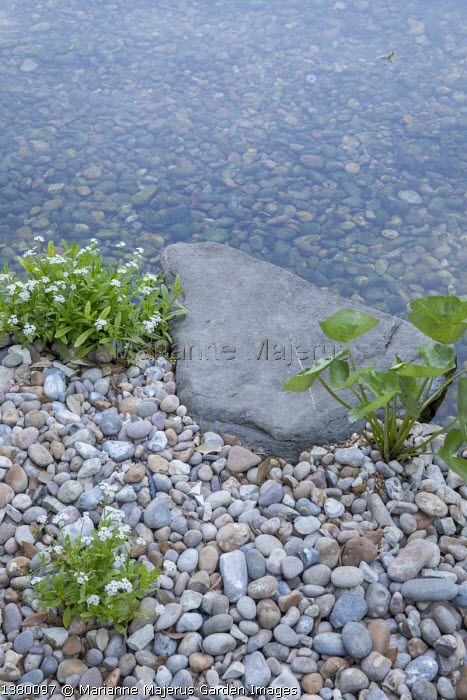 Marginal planting around natural swimming pond, pebbles