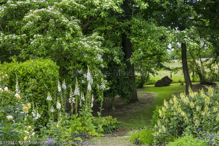 Phygelius aequalis 'Yellow Trumpet', Cotoneaster frigidus 'Cornubia', Rosa 'The Pilgrim'