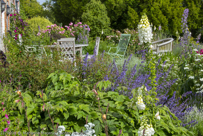 Wooden table and chairs on patio, Digitalis purpurea f. albiflora, Clematis 'Warszawska Nike', Rosa 'Gertrude Jekyll', Rosa 'Old Blush China', Nepeta racemosa 'Walker's Low'