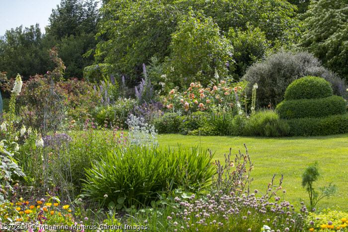 Buxus sempervirens topiary, Rosa 'Grace', Corokia x virgata 'Red Wonder', Abutilon x suntense 'Jermyns', Delphinium requienii