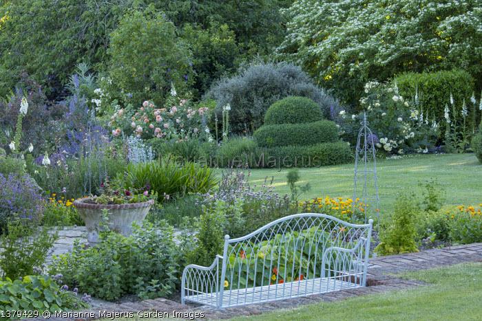 Metal wirework bench, Buxus sempervirens topiary, Rosa 'Grace', Rosa 'The Pilgrim', Corokia x virgata 'Red Wonder',  Abutilon x suntense 'Jermyns', Delphinium requienii