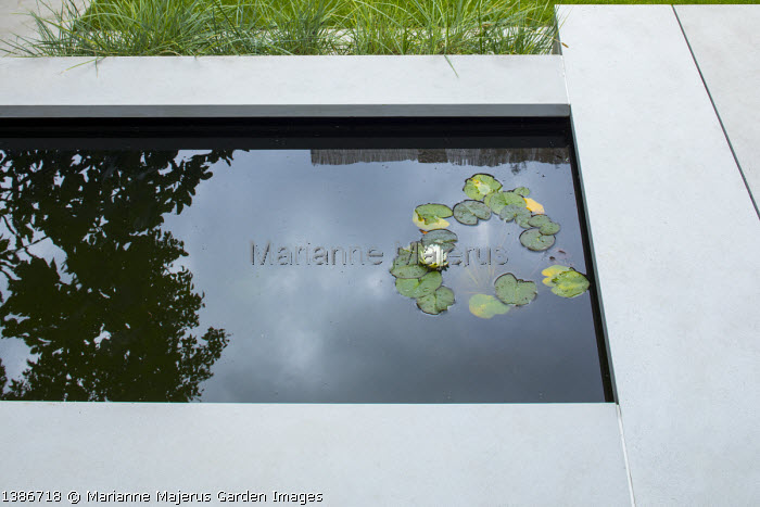 Water lily in stone-edged formal pool, reflections