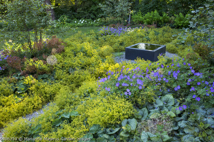 Raised square infinity pool on gravel terrace surrounded by carpet of Alchemilla mollis, geraniums, brunnera and euphorbia, multi-stemmed amelanchiers