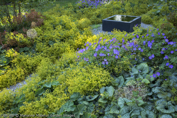 Raised square infinity pool on gravel terrace surrounded by carpet of Alchemilla mollis, Geranium 'Rozanne', Brunnera macrophylla 'Jack Frost' and euphorbia, multi-stemmed amelanchiers