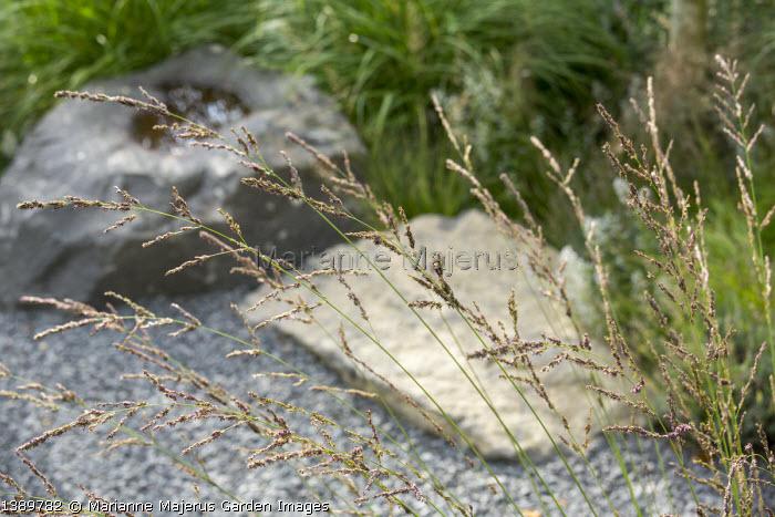 Molinia caerulea subsp. arundinacea 'Skyracer', basalt rocks