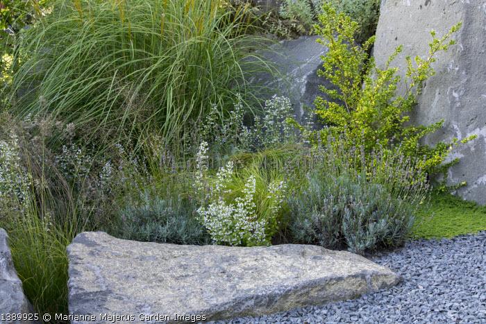 Contemporary basalt rock garden, Calamintha nepeta, Lavandula angustifolia 'Dwarf Blue´, Sporobolus heterolepis 'Cloud´, Miscanthus sinensis 'Adagio', Ilex crenata 'Convexa'