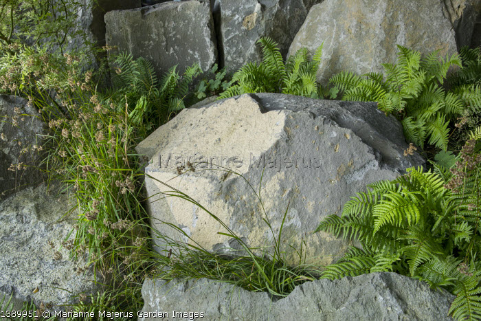 Basalt rocks interspersed with ferns, Luzula nivea
