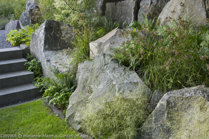 Contemporary basalt rock garden, Deschampsia cespitosa, Luzula nivea
