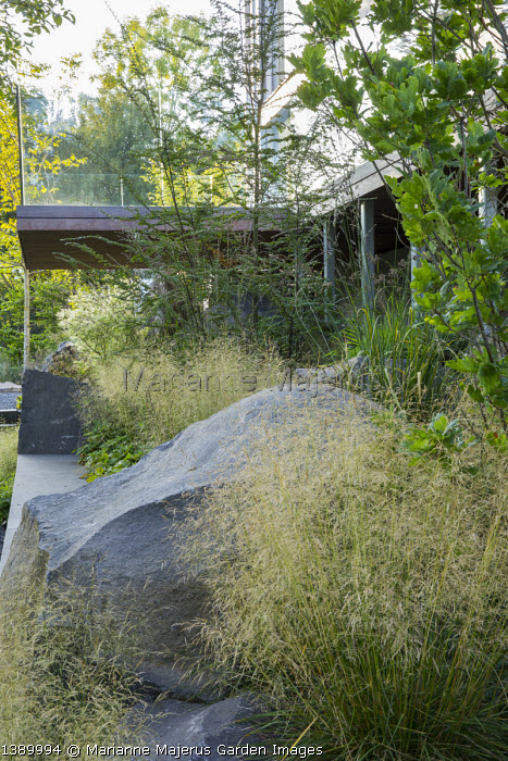 Large basalt rock, balcony, Deschampsia cespitosa, Quercus robur 'Fastigiata', Nothofagus antarctica